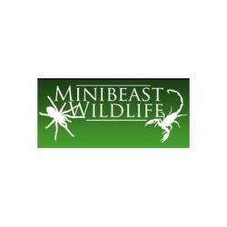 Mini Beast Wildlife