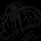 Hermit Crab from Alaskan Hermit