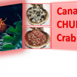 Canadian Chubby Crab