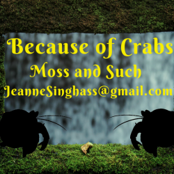 Because of Crabs