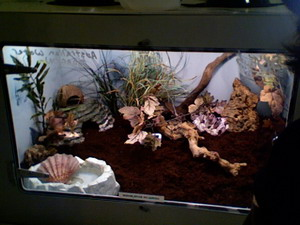 A Home For Your Hermit Crab The Crab Street Journal