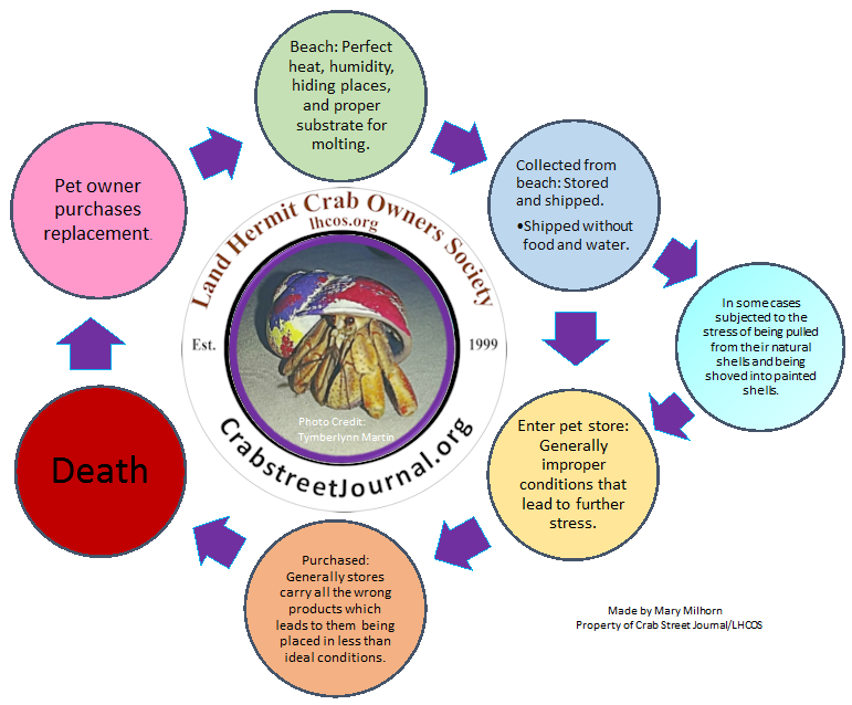 The Post Purchase Stress death cycle created by Mary Milhorn
