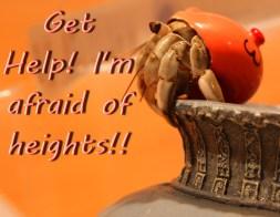 Emergency Hermit Crab Help