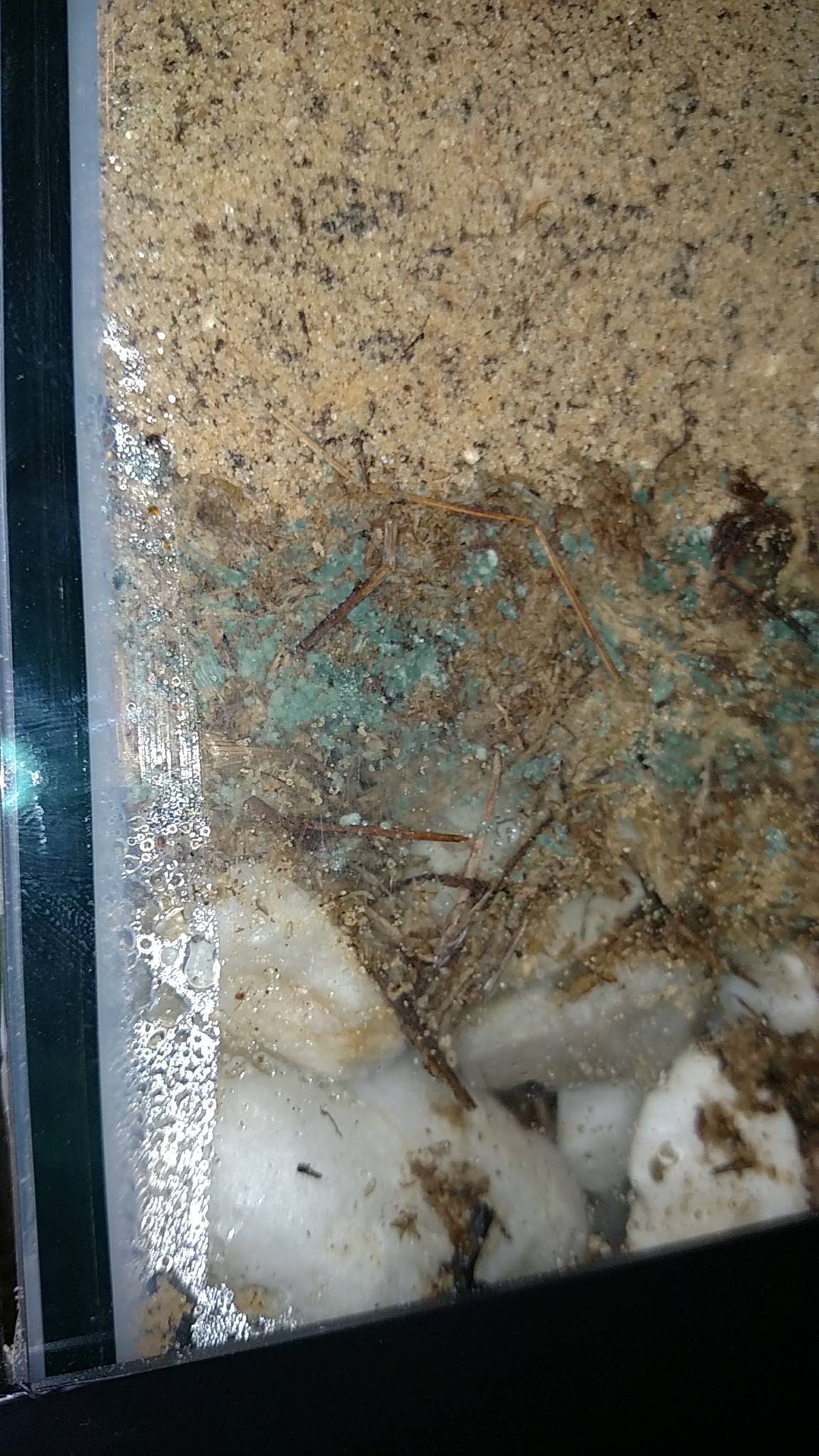 Photo Credit: Mary Milhorn Trichoderma outbreak in spaghnum moss