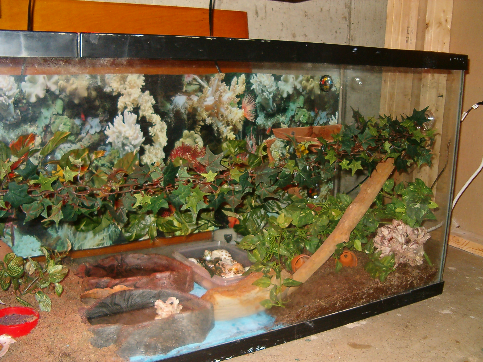 Turtle dock and suspended vine with a long branch