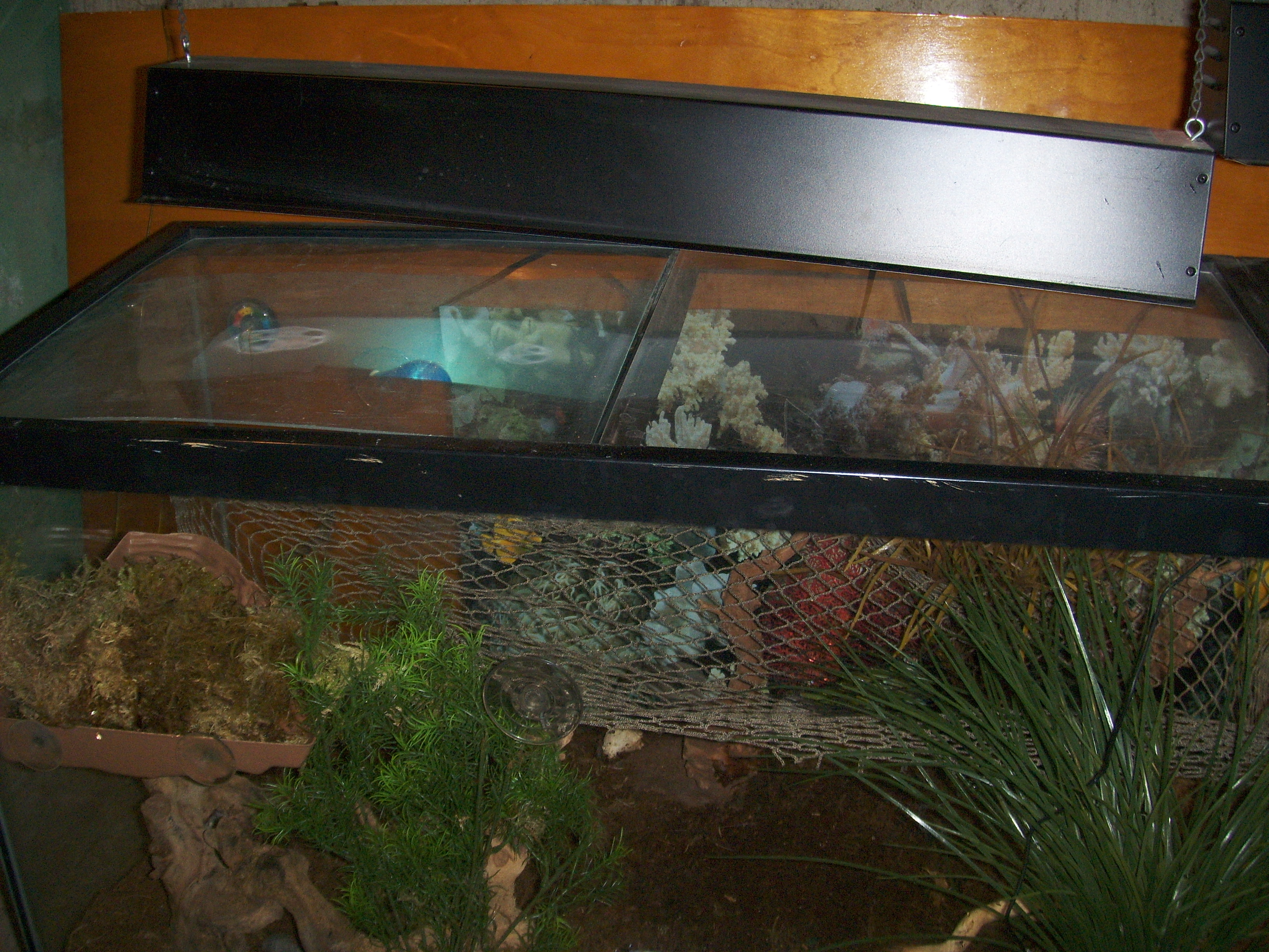Another turtle dock and fish net